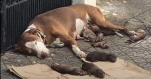 Starving Mama Dog And Her Malnourished Newborns Saved Just In Time