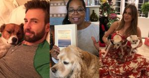 Our Favorite Celebrity Dog People And Their Dogs