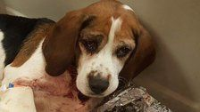 Dogs Thrown From Vehicle On New York Highway, Police Say