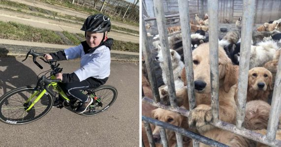 8-Year-Old Boy Rides His Bike To Save Dogs From The China Meat Trade