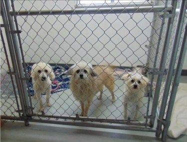 Distemper Killed 18 Dogs at Two Washington Rescues
