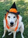 Halloween Safety: Costumes & Your Dog