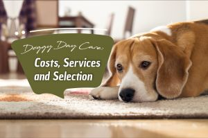 Doggy Day Care: Costs, Services and Selection