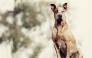 It's Time To Debunk These 8 Myths About Fostering Rescue Dogs