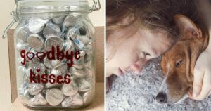 """Animal Hospital Offers Dogs Chocolate """"Goodbye Kisses"""" In Their Final Moments"""