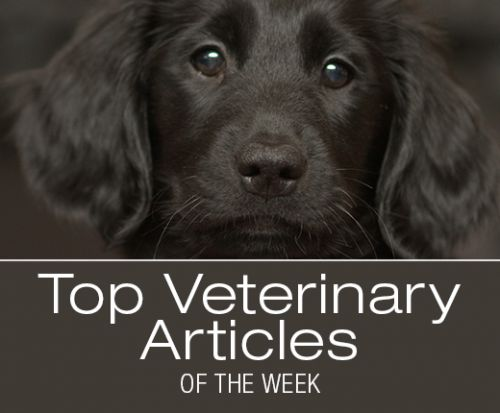 Top Veterinary Articles of the Week: 6 mistakes to avoid in the veterinary ER