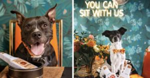 Photographer Hosts 'Dinner Pawty' For Adoptable Dogs