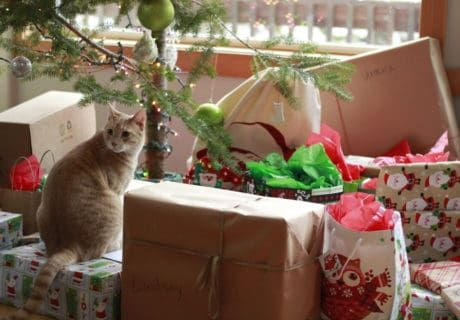 A Gift Guide for Adventure Cats