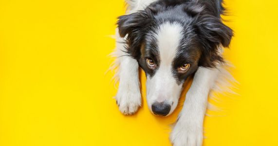 "Dogs Evolved A Special Muscle That Lets Them Give ""Puppy Dog Eyes"""