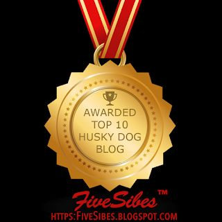"""Newsy Tuesday: Our Blog is a Top 10 Husky Dog Blog on """"the Planet!"""""""