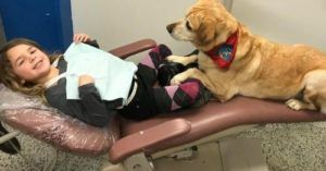 Amazing Therapy Dog Hired By Dentist To Do The Sweetest Job
