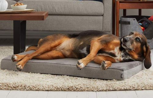 Is Your Dog In Pain And Trying To Hide It?