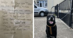 "Dog Abandoned After 10 Years For ""Not Learning To Be Good"""