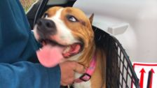 Dog Found After Going Missing For Days At Atlanta Airport