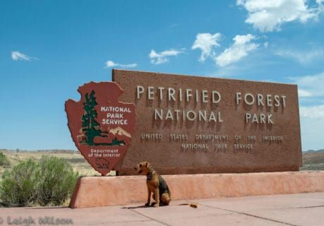 Visiting Arizona's National Parks with Pets