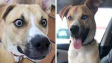 'Hellion' Foster Dog Gets Hilarious Adoption Site Filled With F-Bombs