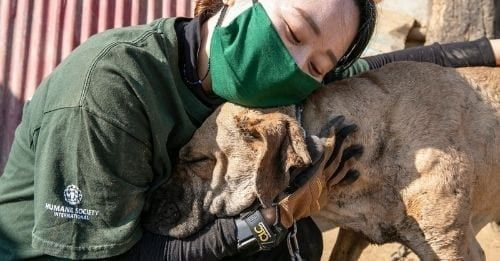 Nearly 200 Dogs Rescued From The Dog Meat Trade Needs Homes In The U.S