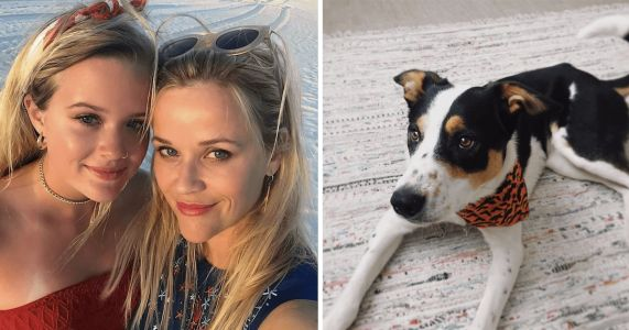 Reese Witherspoon's Daughter Adopted Dog Moments Before Their French Bulldog Passed