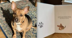 Rescue Dog's Children's Book Helps Other Dogs In Need
