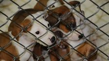 How To Save Rescued Puppies: Ship Them North