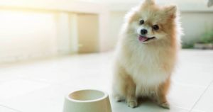 RECALL: Another Popular Dog Food Has Dangerous Vitamin D Levels