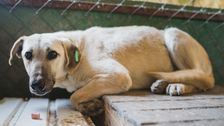 Furor Erupts After Australian Officials Kill Rescue Dogs Over COVID-19 Fears