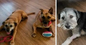 Woman Requests Shelter's 2 Longest Residents, Ends Up Adopting 3 Seniors