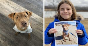 11-Year-Old Twitter Star Virtually Pets Dogs During COVID
