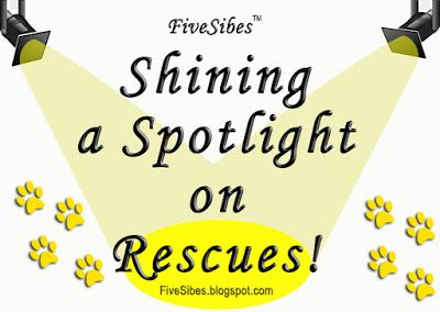 WaitingWednesday Spotlight: Siberian Husky Rescue of Florida, Inc