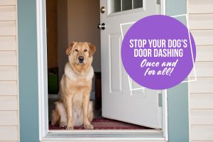 Stop Your Dog's Door Dashing Once and For All