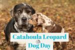 Catahoula Leopard Dog Day