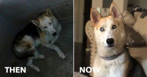 """Blind, Anxious Dog Loses 20 lbs In Shelter. Then iHeartDogs Customers Help Give Him a """"Second Chance"""""""
