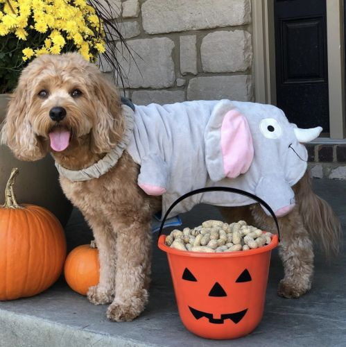 This Hilarious Butt Costume For Your Dog Wins Halloween