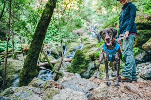 The Adventurer's Guide to Hiking with your Dog