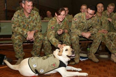 Dog Breeds Who Have Provided Their Service To The Nation With Honor