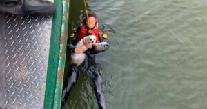 NY Police Rescue Dog & The Owner Who Jumped Into Hudson River To Save Him