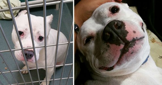 Before And After: 17 Beautiful Rescue Dogs' Transformations