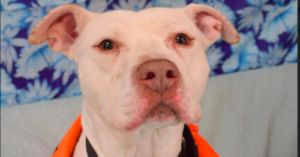 Sad Pup Was Returned To Shelter After Adoption, But He Never Gave Up Hope