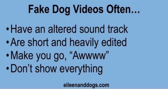 Guess What! That Dog Video Is Probably Fake!