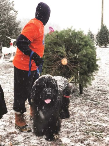 The Newfoundlands of Plow Farms
