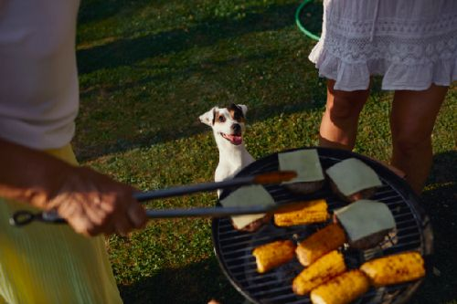 Can Dogs Eat Corn? The Answer Isn't As Simple As You Might Think