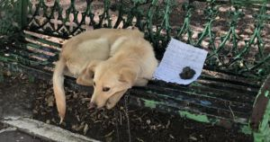 Terrified Puppy Found Abandoned On Bench With Heartbreaking Note