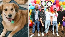 The 'Queer Eye' Guys Gave A Shelter Dog A Makeover, And It's Doggone Sweet