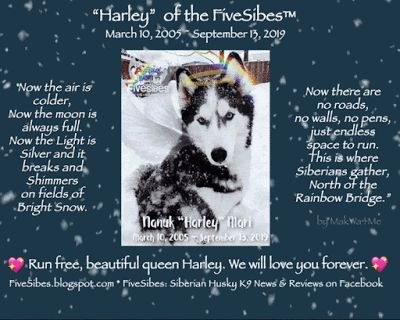 An End to a Reign: Goodbye Beautiful Harley, Alpha Queen of the FiveSibes