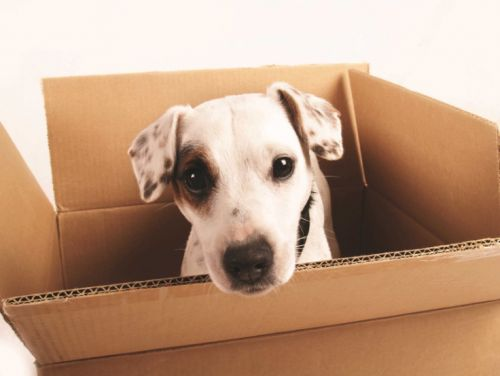 A Short Guide To Shopping Online For Your Dog