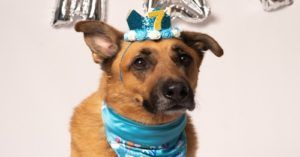 Let's Pawty! Celebrate Your Dog in the Best Way Ever!