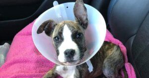 Thanks To You, 2 Broken Back Legs Won't Stop Ruthie!
