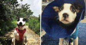 Dog Rescued From House Fire Is Now A Hero To Many