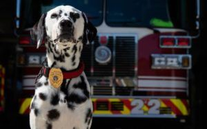 """Georgia Firefighter Remembers Late Dog Who Changed His Life, """"She Was Everything To Me"""""""