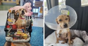 Dog Rescue Goes Above And Beyond To Save Abused Dog's Life
